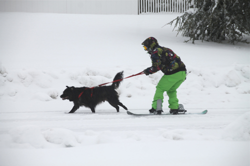 A Calverton resident lets his dog take the lead after Tuesday night's snowstorm. Paul Squire photo.