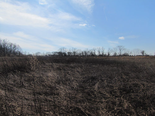 A view from a neighboring property of potential Jamesport park site. Tim Gannon photo.