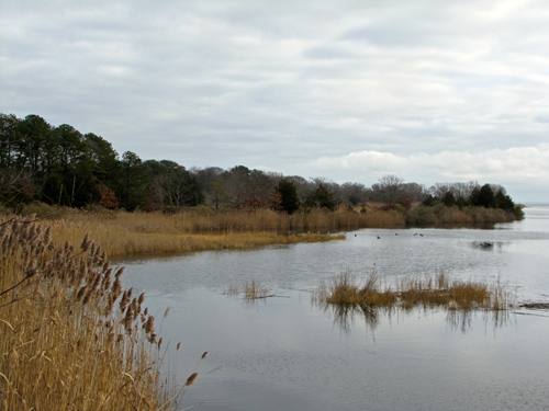 Suffolk County has OK'd the appraisal of a 94-acre property near Indian Island in Riverhead. (Credit: Tim Gannon)