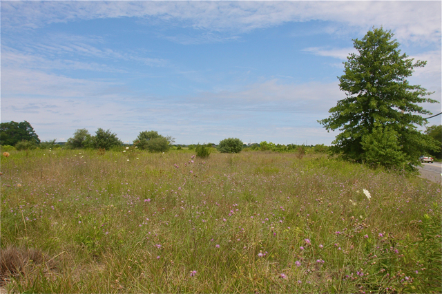 The land where the Calverton Manor project wanted to build just to the west  of Manor Lane on Route 25 in Calverton. (Credit: Barbaraellen Koch photo)