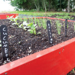 KATHARINE SCHROEDER PHOTOVegetables grow in raised beds.