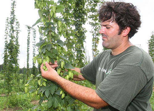 wading river hops for microbreweries
