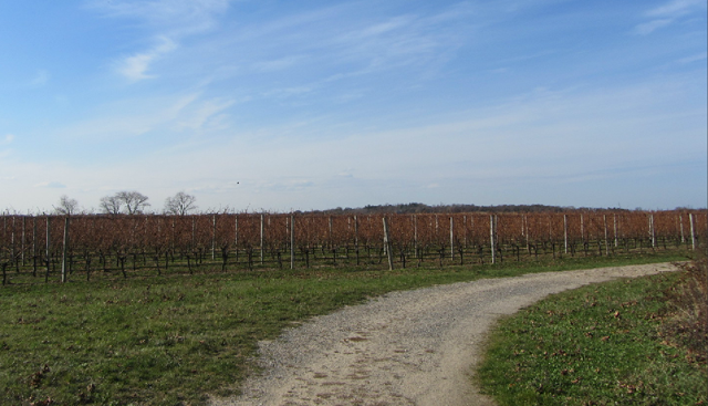 The property includes mature vines producing pinot noir, merlot and chardonnay. (Credit: Town & Country Real Estate)