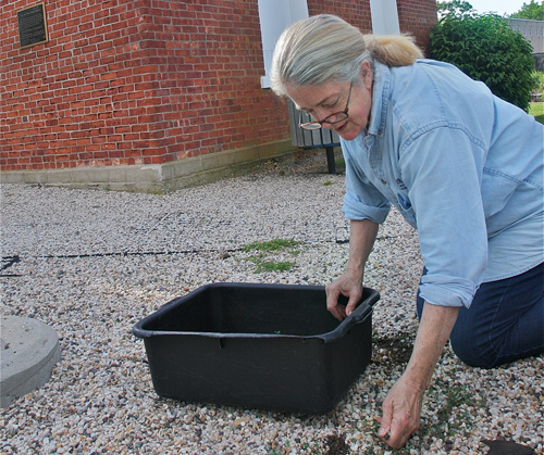 Dark Horse Restaurant owner Dee Muma weeds the gravel in front of the pump house in Grangebel Park Monday evening. She'll soon be selling lunch there. (Credit: Barbaraellen Koch)