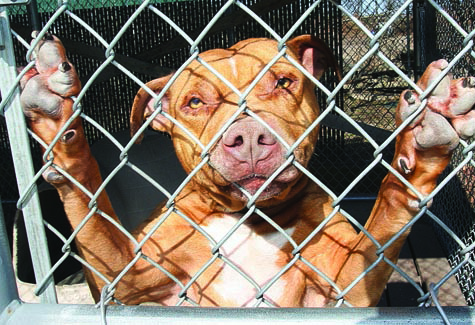 BARBARAELLEN KOCH FILE PHOTO | A dog at the Youngs Avenue animal shelter in 2011.