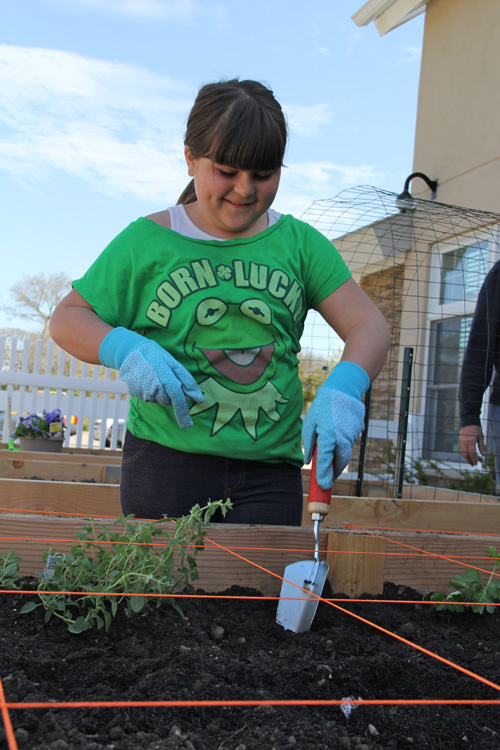 Kate Pennacchia, 9, of Hampton Bays helping plant herbs and vegetables in the Southampton Senior Services sponsored box.