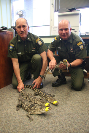 Lt. Dallas Bengel, left, and ECO Mark Simmons caught these gators Friday morning.