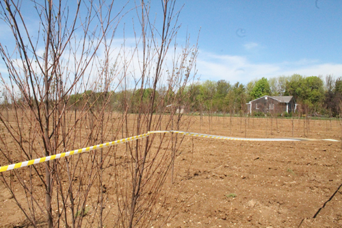 PAUL SQUIRE PHOTO | Caution tape now surrounds the fields where the saplings were allegedly stolen.