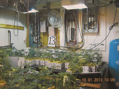 COURT DOCUMENT IMAGE | A photo police say was taken inside Edward Dispirito's home during a raid on his property Tuesday morning. Other photos show sets of plants arranged in rows in Mr. Dispirito's basement and garage.