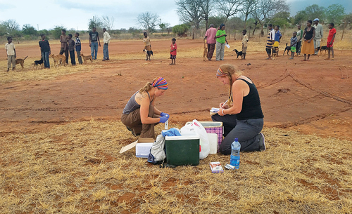 Gillian Wood Pultz (right) and another African Network for Animal Welfare (ANAW) volunteer prep a satellite clinic to administer rabies vaccines to dogs in the city of Voi, located in southern Kenya. (Courtesy photo)