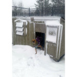 Port in his super snug doghouse at the North Fork Animal Welfare League. (Credit: Gillian Pultz)