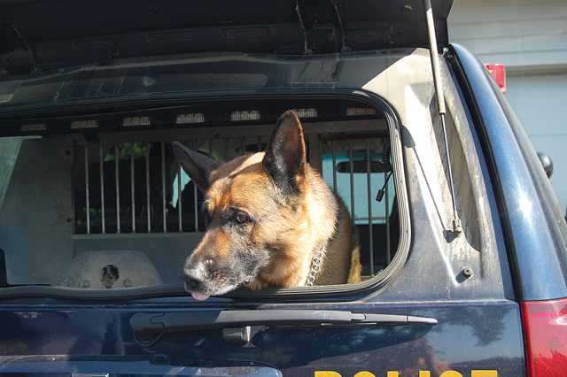 O'Neill, a German shepherd, hangs out in the back of a New York State Police truck. (Credit: Nicole Smith photos)