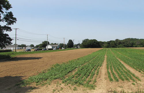 A 46-lot subdivision is proposed on this farmland north of Sound Avenue in Riverhead. (Credit: Tim Gannon)
