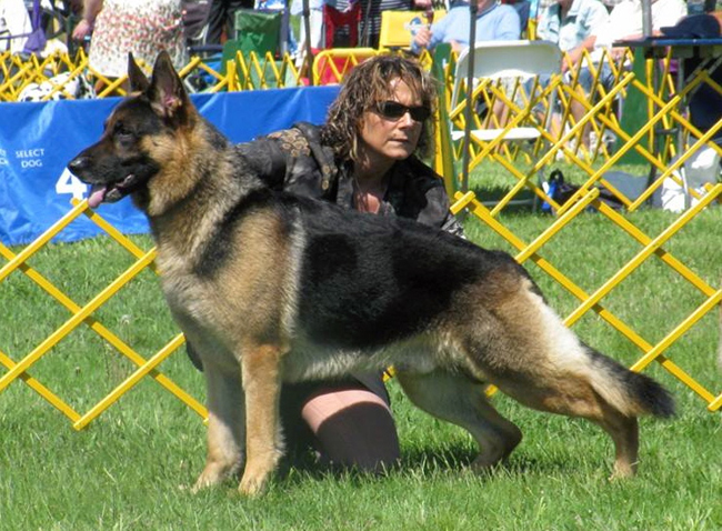 Sue Condreras with her German shepherd Rocket, who will compete at the Westminster Dog Show next month. (Credit: courtesy photo)