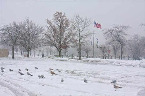 Seagulls hunkered down in the snowy parking lot.
