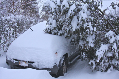 BARBARAELLEN KOCH PHOTO  |  A tree leans on a buried car in Polish Town Saturday.