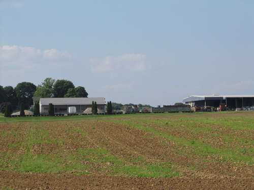 This sod farm on the east side of Edwards Avenue, just north of the railroad, may host a 38-acre solar energy farm. (Credit: Tim Gannon)