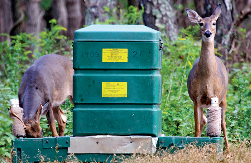 JIM COLLIGAN PHOTO | Two deer feeding at one of the '4-poster' tick control stations on Shelter Island.