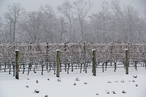 Carrie Miller photo  |  Jason's Vineyard in Jamesport