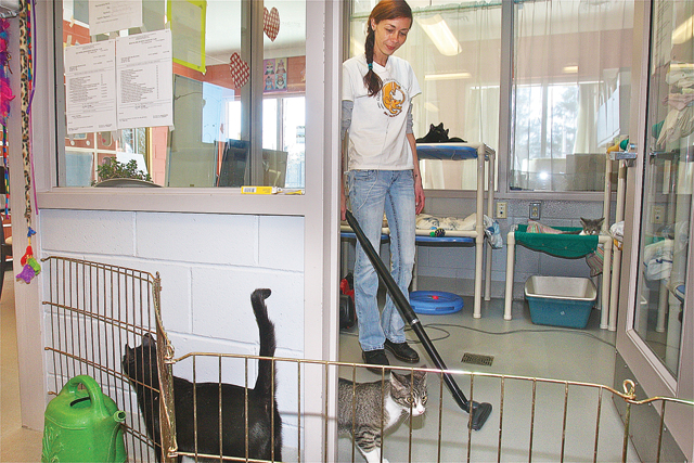 Southold Animal Shelter kennel attendant Laura Zurek cleans up one of the cat rooms Monday morning. (Credit: Barbaraellen Koch)