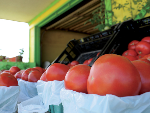 Tomatoes at Wesnofske Farms in Peconic. (Credit: Krysten Massa)