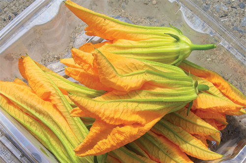 Zucchini flowers for sale at Wells Homestead farmstand in Aquebogue. (Credit: Barbaraellen Koch)