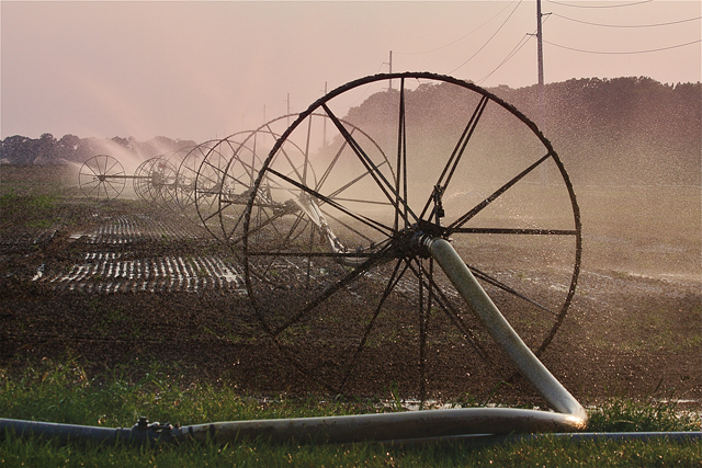 Barbaraellen Koch's award-winning photograph of an irrigated Jamesport farm during a drought last summer.