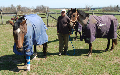 Alberto Bengolea with three of the 15 horses boarded at the 4-H Camp on Sound Avenue. Veronica, left, was injured after someone cut the fencing on the property and the horses escaped overnight Sunday.
