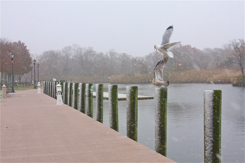 BARBARAELLEN KOCH FILE PHOTO | Segulls fight for real estate space along the Peconic River.