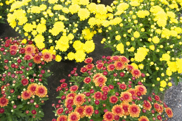 Homeside Florist