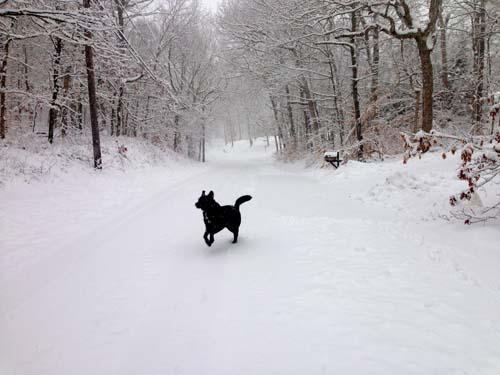 snoww3