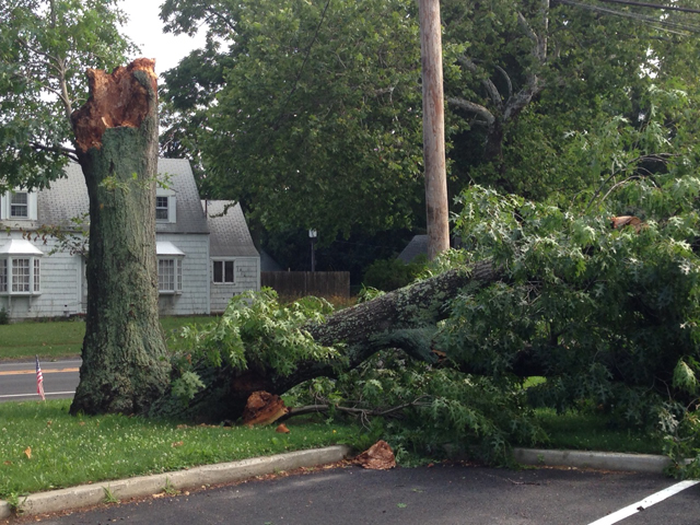 A downed tree in front of Aquebogue Elementary School. (Credit: Joe Werkmeister)