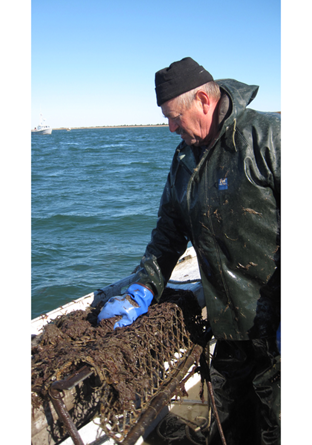 A link to the Island's past: Scallop season kicked off Monday