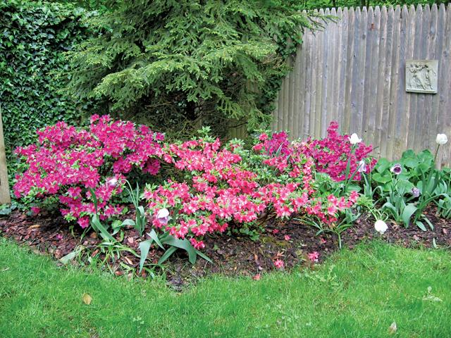 052815_Garden_CG
