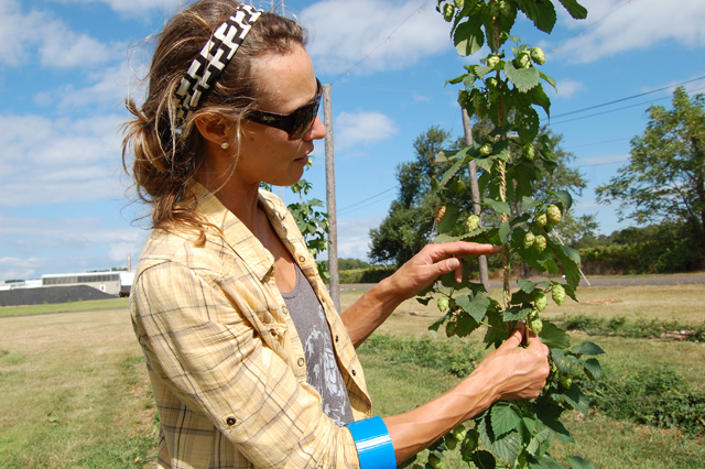 Jaclyn Van Bourgondien examined hops at Farm to pint in Peconic. (Credit: Vera Chinese)
