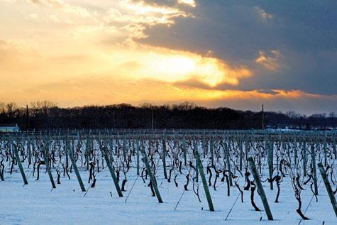 Wine_Bedell_WinterScene_AR12