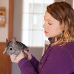 Ms. Allen introduces Nugget, a chinchilla.