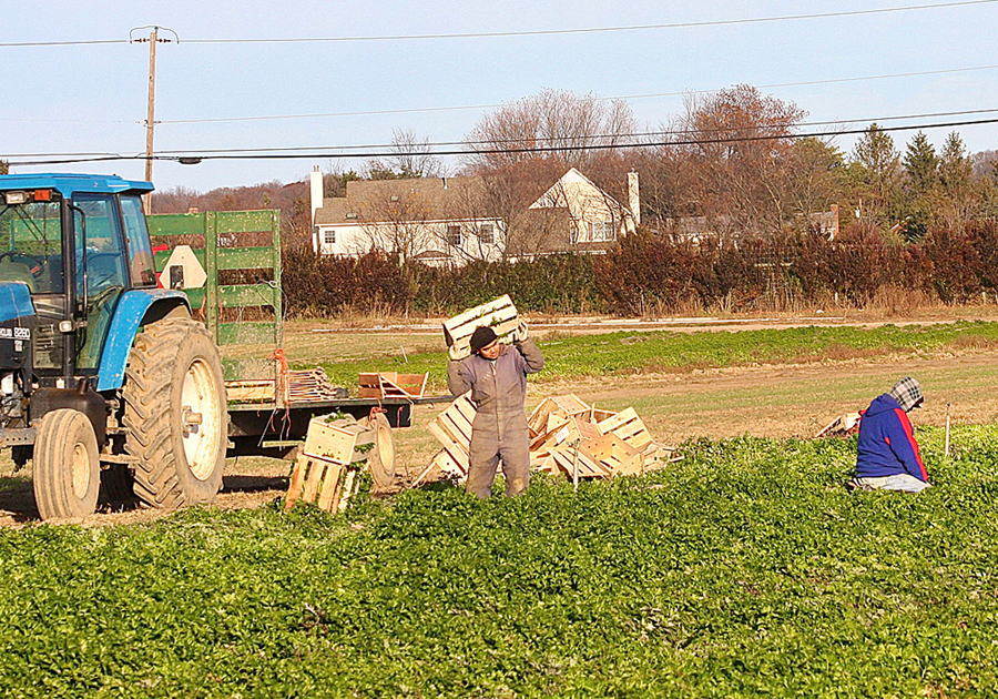 Workers at a farm off Sound Avenue in Riverhead in 2012. (Credit: Barbaraellen Koch, file)