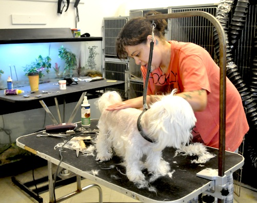 Pet groomer Katie Capichana will continue to operate in back of the former Feed Bag location in Cutchogue. (Cyndi Murray photo)