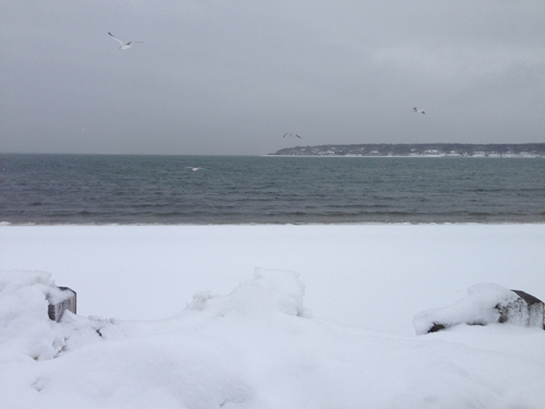 Gull Pond in Greenport. Cyndi Murray photo.