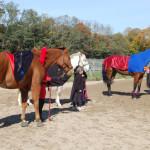 Horse5WP