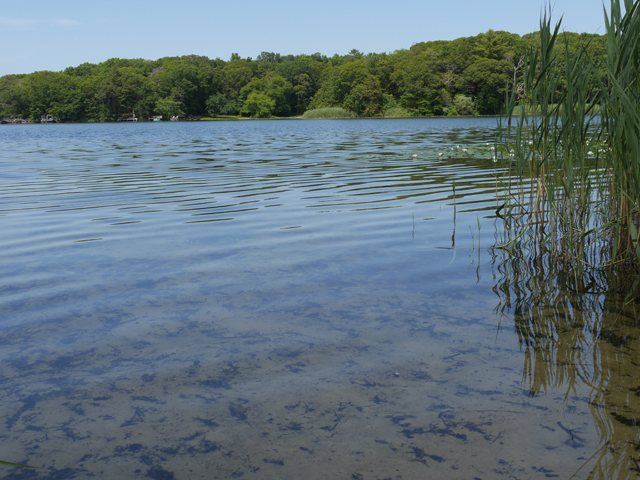 Clear waters at Laurel Lake on Tuesday. (Credit: Krysten Massa)