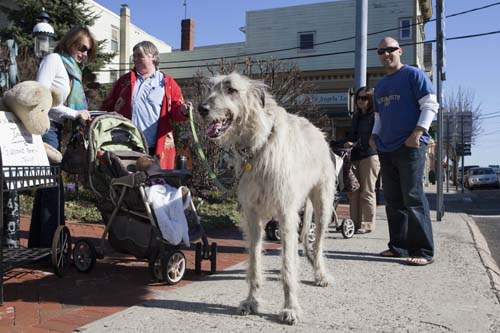 KATHARINE SCHROEDER PHOTO | Lordy, a true Greenport celebrity, died last week at the age of 6.