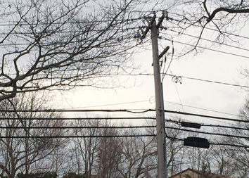 PSEG plans to install wooden utility poles treated with a controversial chemical next month. (Credit: Cyndi Murray)