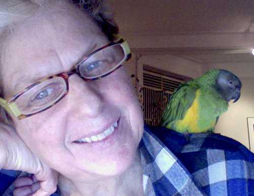 Joyce Culver and her Senegal parrot, LuLu.