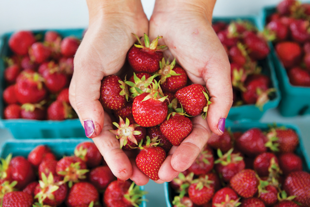 Aside from being delicious, strawberries are packed with antioxidants and vitamin C. What's not to love? (Credit: Katharine Schroeder)