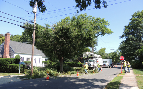 Workers with Lewis Tree Service trim a tree Tuesday morning on Village Lane in Orient. (Credit: Claire Leaden)