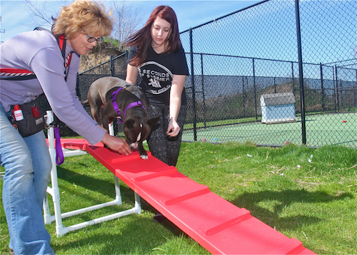 Trainer Gina Lepine  and Maddalena Mineo, 17, places treats on the agility plank to encourage Coco, 2 1/2, to walk down the incline Thursday afternoon. (Credit: Barbaraellen Koch)