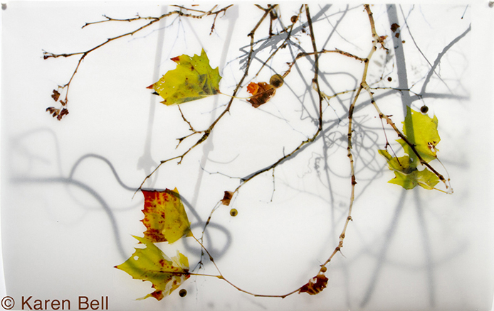 """""""Green Leaves"""" by Karen Bell."""