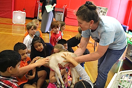 Debbie Slack, of Catapano Dairy Farm, introduces a 10 day old goat to Southold Elementary School students. (Carrie Miller photos)